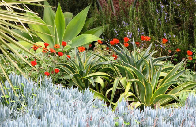 drought resistant garden. Debora Carl 6 Drought Resistant Garden