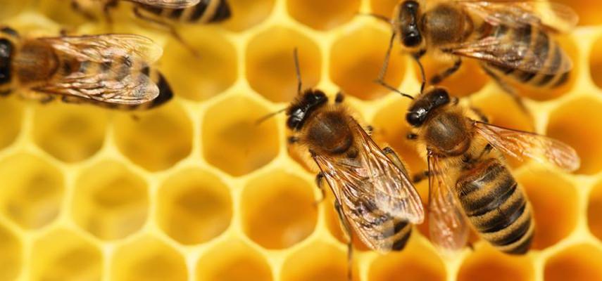 bees manuka honey