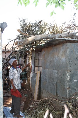 THAT WAS CLOSE: Joey ''Home Boy'' Papier (59) looks at the big tree branch that landed on his shack.