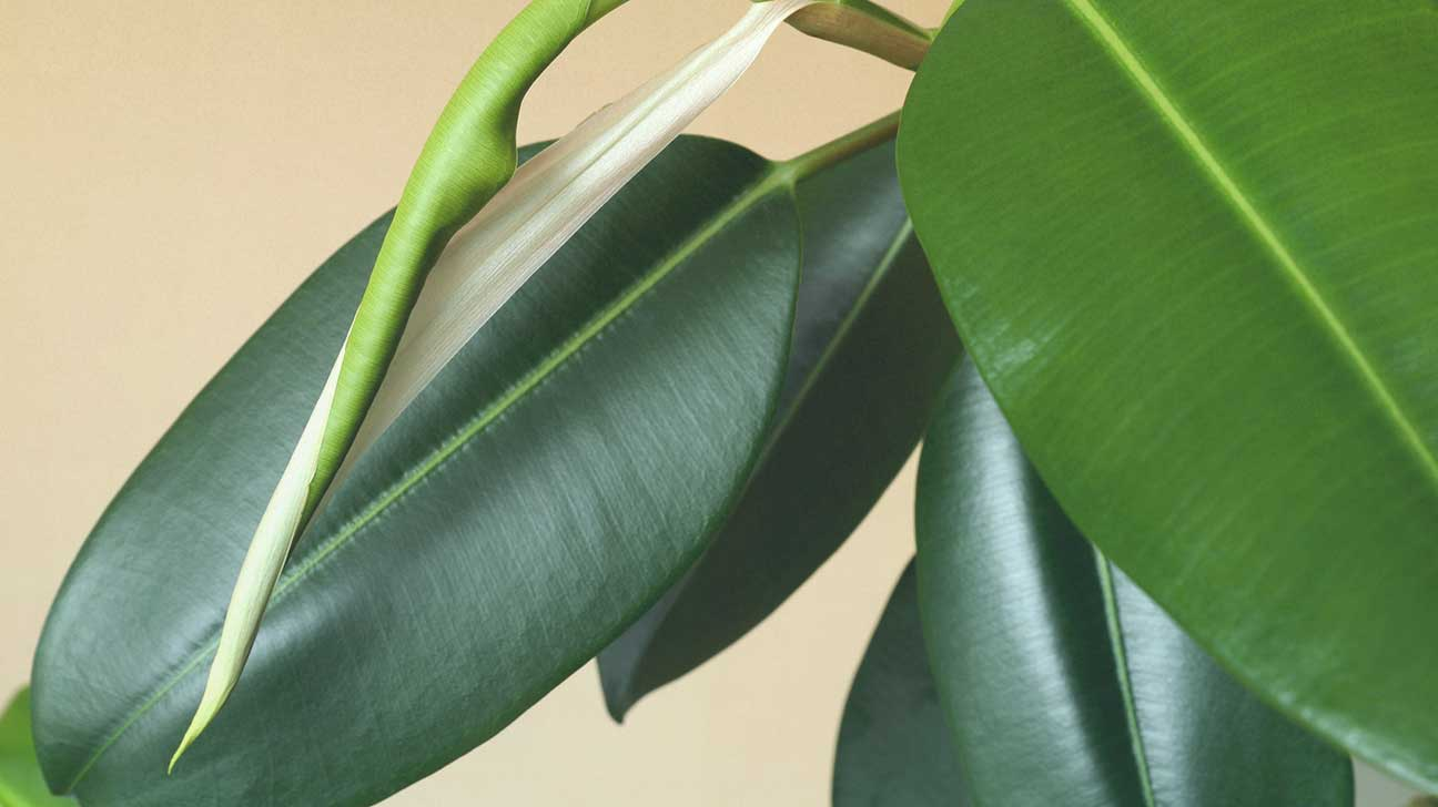 10 Plants That Purify The Air In Your Environment