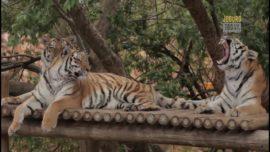 #InFocus – City Parks and Zoo Festive Season