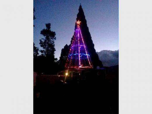 Ever wondered where Christmas trees originate from? |Alberton Record