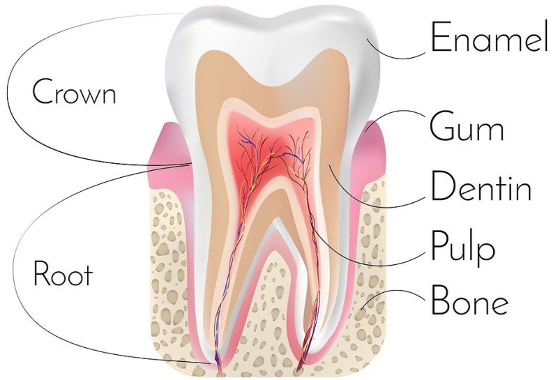Dental fillings may soon be a thing of the past with teeth naturally dental fillings may soon be a thing of the past with teeth naturally repairing themselves ccuart Gallery