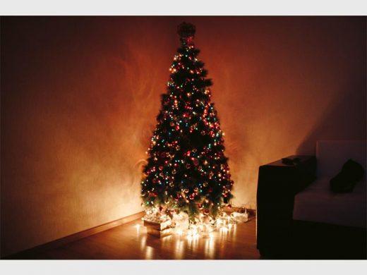 The Origin Of The Christmas Tree.Origins Of Christmas Trees Alberton Record