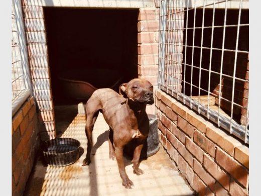 Pets up for adoption at Alberton SPCA | Alberton Record
