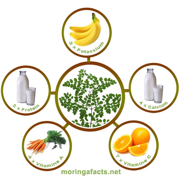 Moringa, the miracle tree of life, here's what you need to