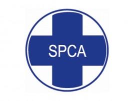 spca-logo_64139
