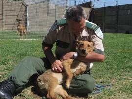IMG_6142 (dog victim of cruelty) October 2016