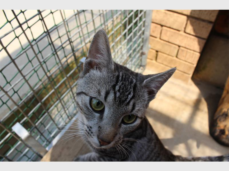 Adopt a fluffy cat or kitten from the Jhb SPCA | Southern