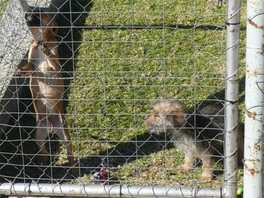 Johannesburg SPCA will be hosting a Mandela Day event | Southern Courier