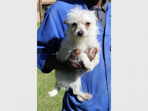 Adopt a dog today from the Johannesburg SPCA | Southern Courier