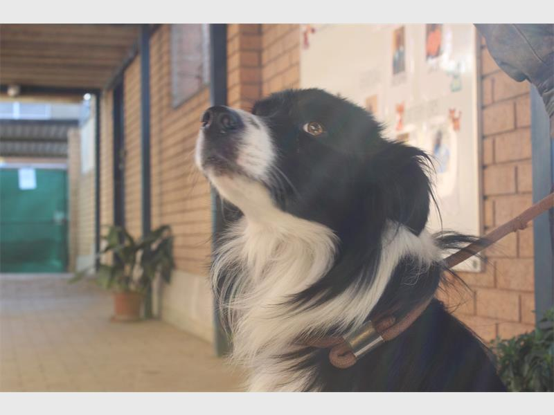 How to adopt a pet at the Jhb SPCA   Comaro Chronicle