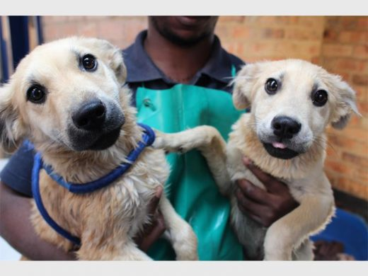 Adopt your fluffy friend today from the Jhb SPCA | Southern