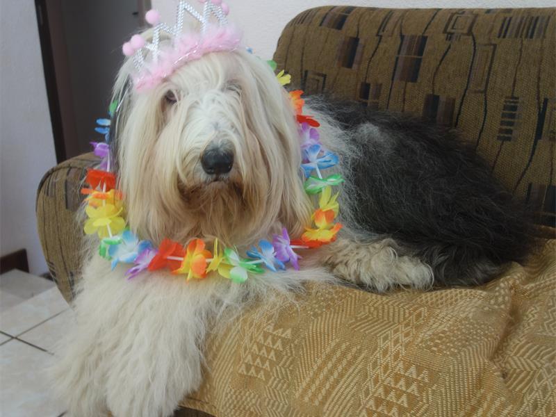 farewell joy dog jazmine comaro chronicle