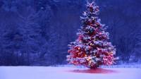 Christmas-Tree_Small