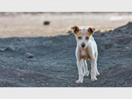 dogstray_74416