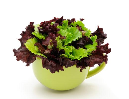 how to grow veggies from kitchen scraps