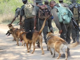 The K9 Unit in the Kruger National Park has proved invaluable in the fight against poaching.