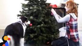 Smart dog decorates christmas tree