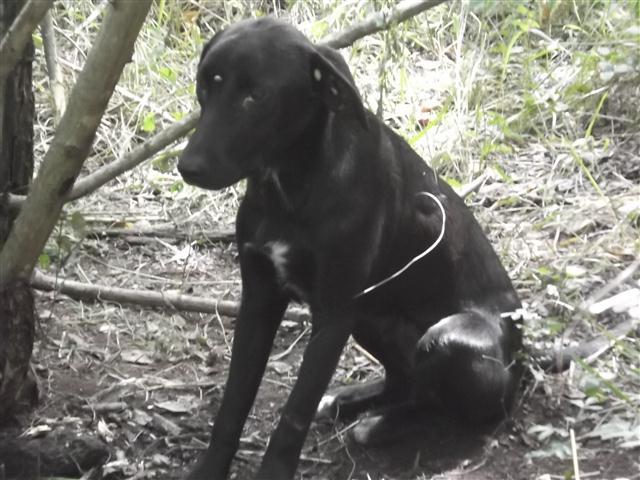 Small Dog Rescue Wv