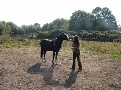 horse whisper (12)