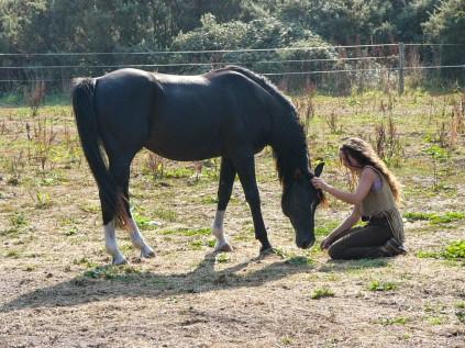 horse whisper (13)