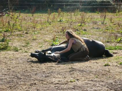 horse whisper (15)