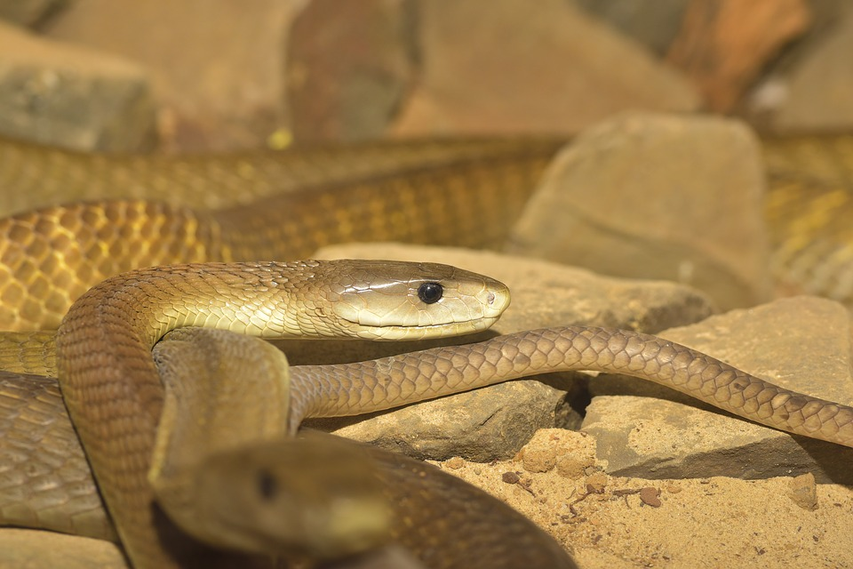 15 Most dangerous animals in Africa | Lowvelder