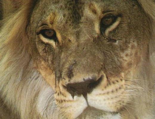 Wonderful World Lionu0027s Day