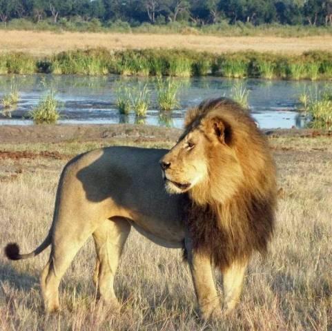 High Quality World Lionu0027s Day