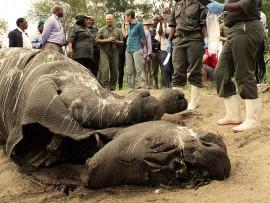 rhino poaching