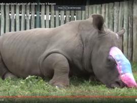 Hope Rhino