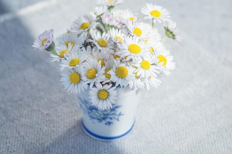 flowers-1352527_960_720 (Medium)