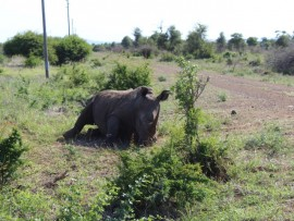 Are the rhino farmers on their knees?The rhino industry have appealed to the Minister to see their point of view during discussions.