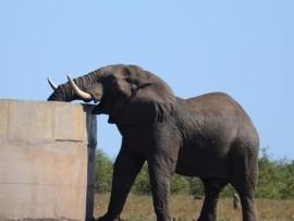 Beheer die omgewing, nie die getalle nie is die strategie van die NKW rondom stygende olifantgetalle.