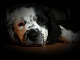 puppy-1171530_960_720