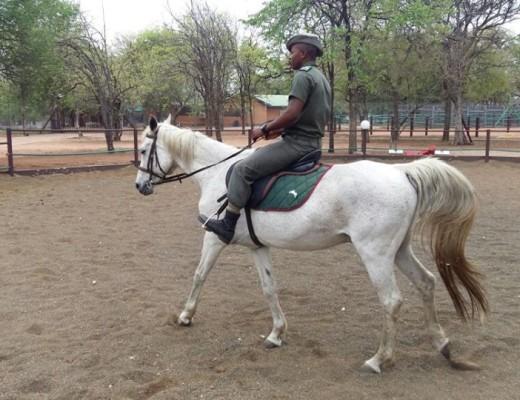 Phalaborwa whitehorse