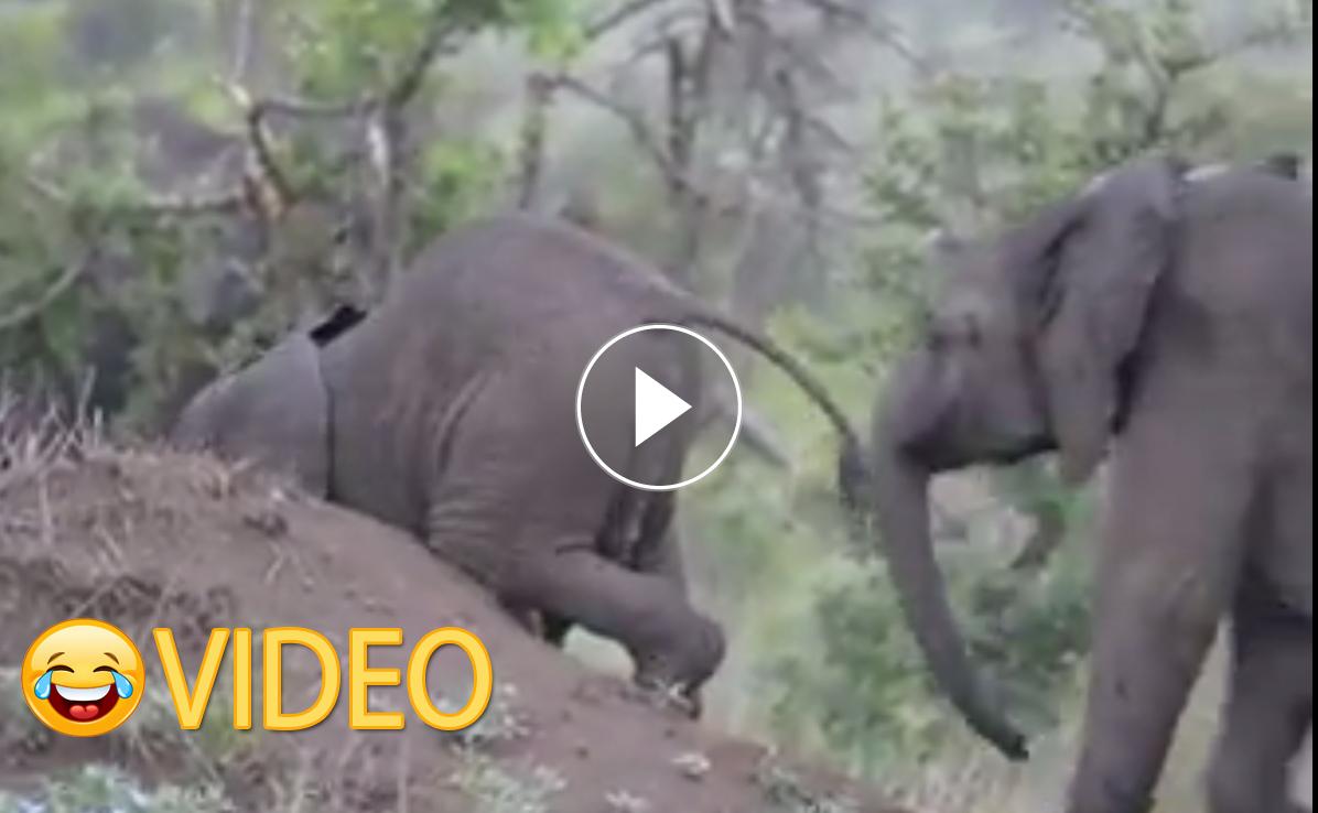 Video: Eloise Saayman