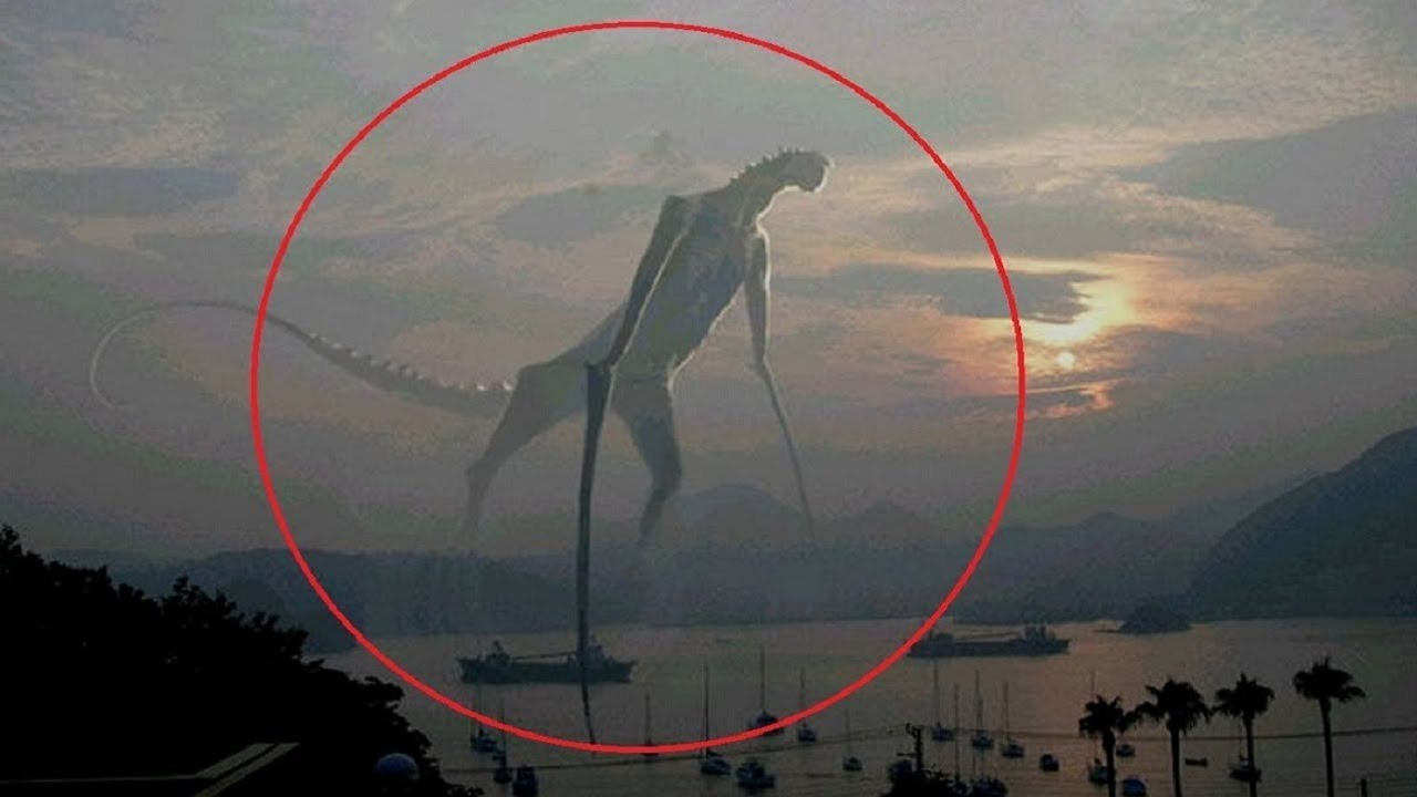 5 Mysterious Creatures...