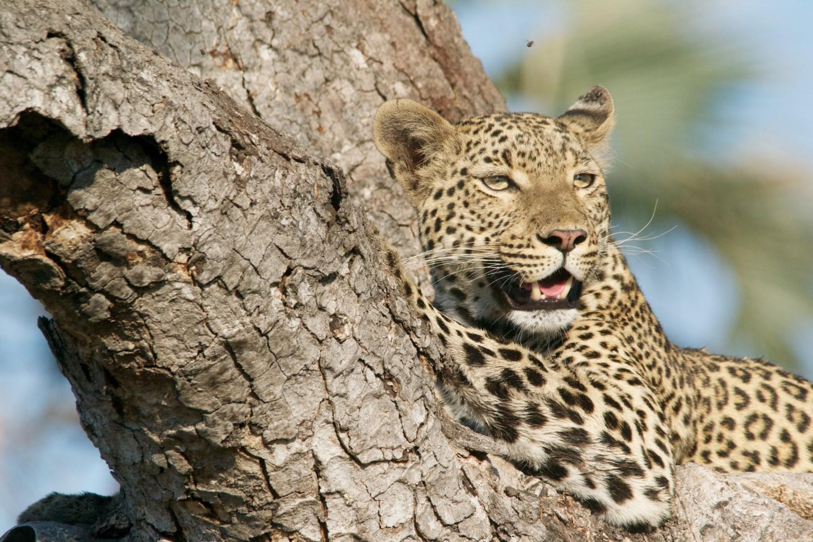 15 Most dangerous animals in Africa   Lowvelder