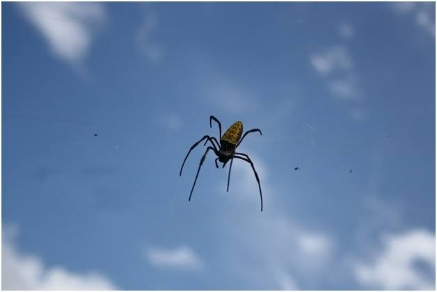 ästhetisches Aussehen autorisierte Website wo zu kaufen We have known that spiders can fly for a long time, but now ...
