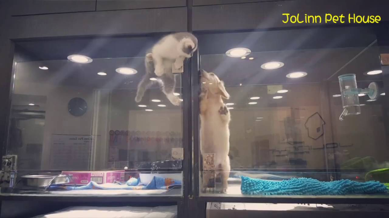 Kitten Escapes Cage to Play With Puppy Friend