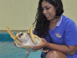 Ula the Loggerhead turtle and Malini Pather, senior aquarist, uShaka Sea World.
