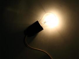 bulb macro close up