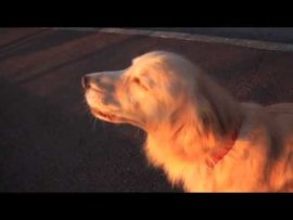 Dog imitating a siren