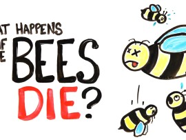 Where will we be without bees?