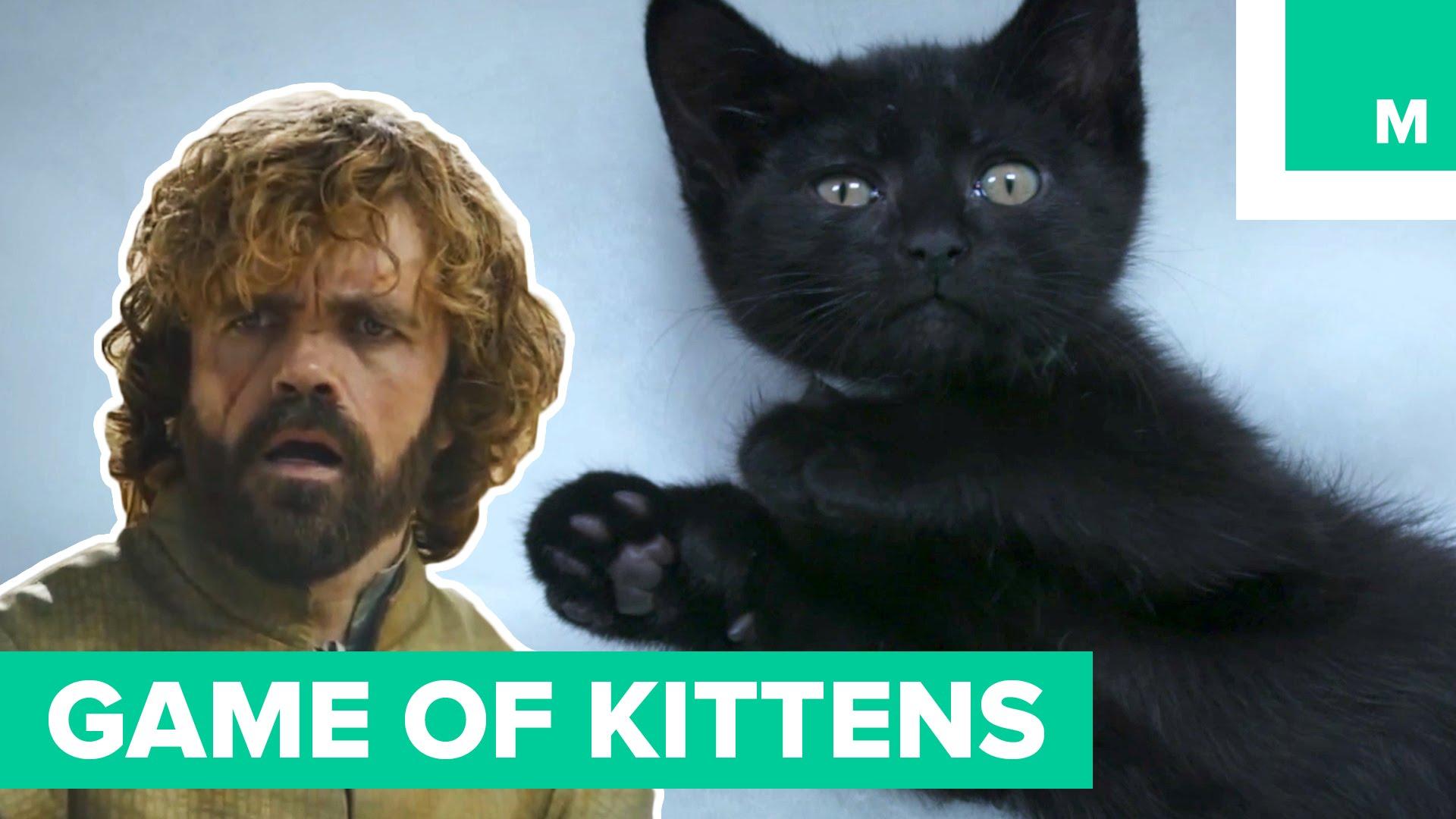 Kittens Remake Season 5 of 'Game of Thrones'