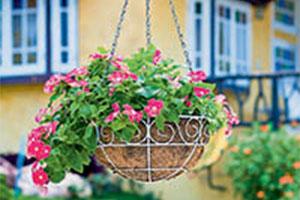 24961946 - pink petunia flower hanging basket