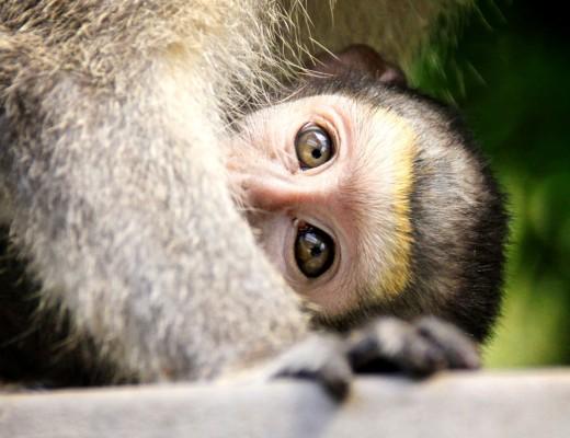 monkey 2 (Medium)