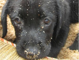 A concerned animal lover has emphasised ensuring that pets are safe this festive season.